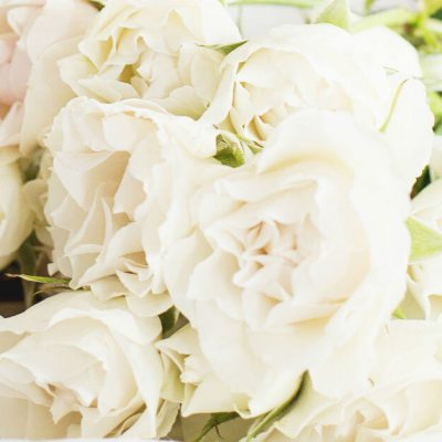 Make date night a priority. Image closeup bouquet of pale pink roses. Image from haute stock photography.