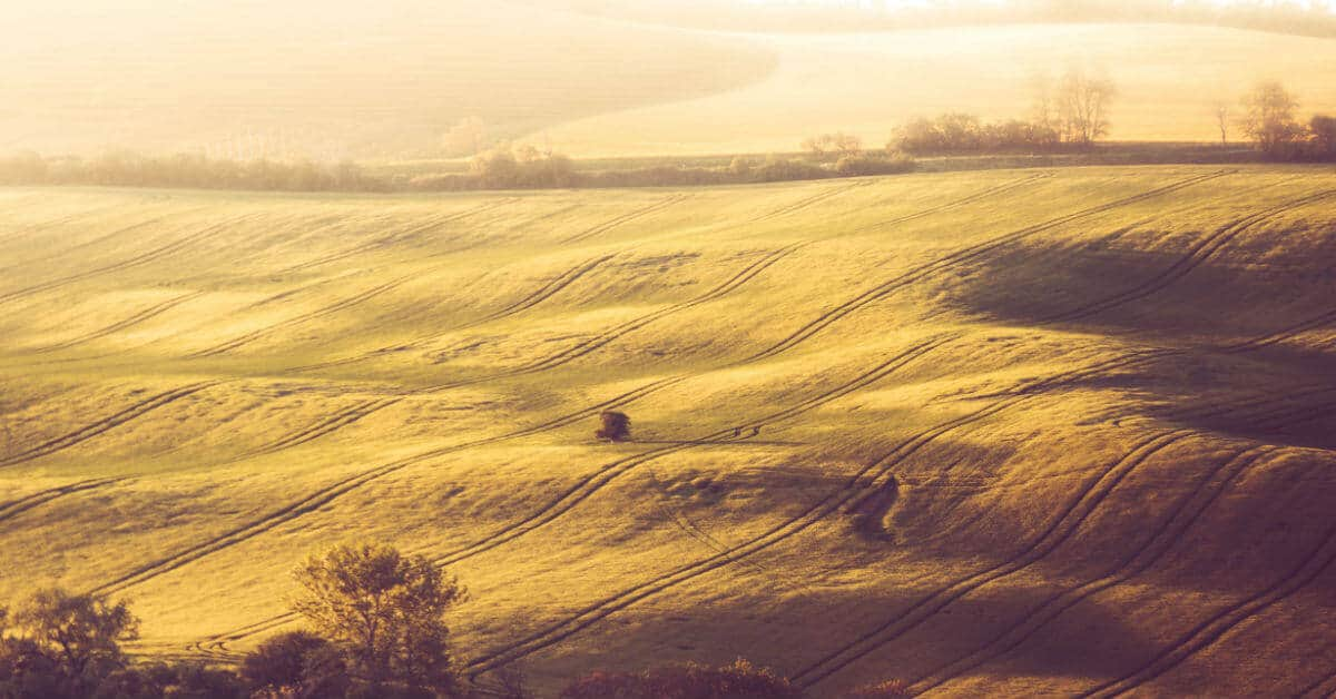 Jesus is the Good Shepherd. I can trust in Him. Image of grassy hilly fields with some trees. Image credit: picjumbo.